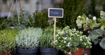 Immagine per l'articolo: Scaloppine alle erbe aromatiche