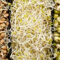 Autoproduzione di germogli per un'alimentazione sana