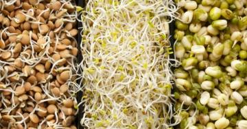 Immagine per l'articolo: Autoproduzione di germogli per un'alimentazione sana e diversificata