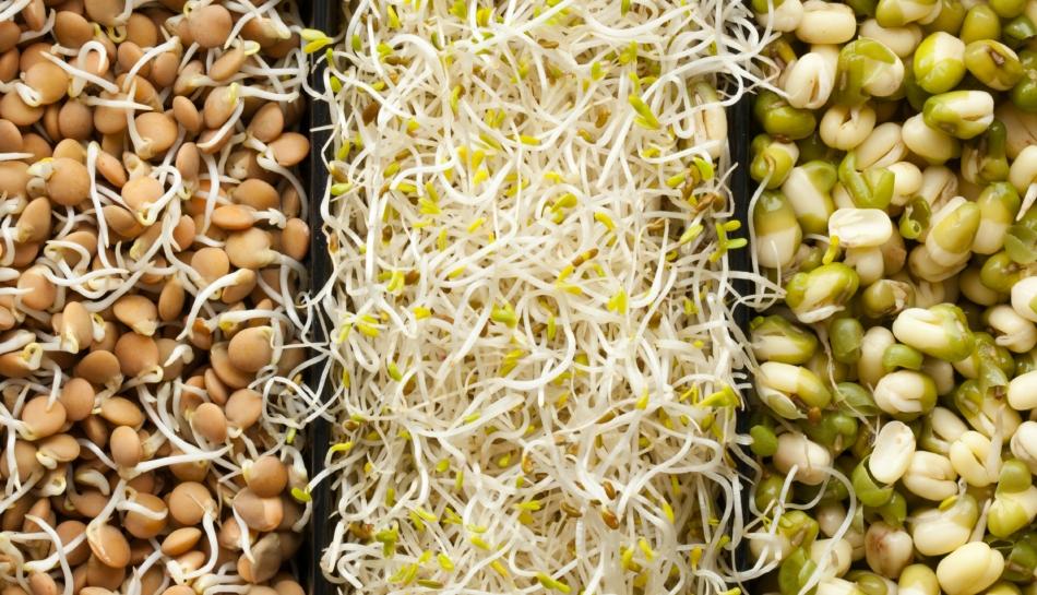 Autoproduzione di germogli per un'alimentazione sana e diversificata