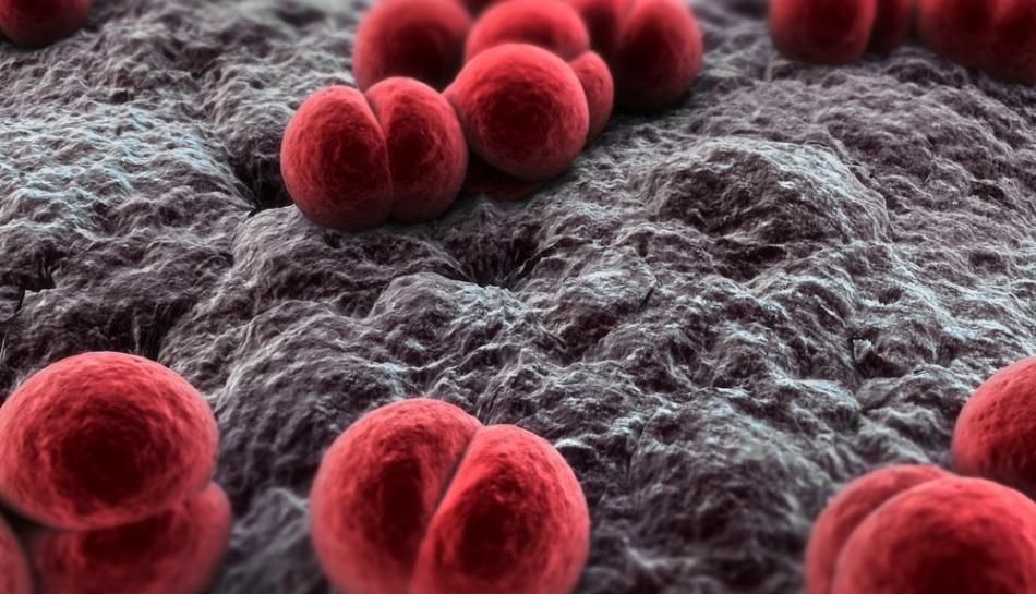 Batterio pneumococco