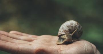 Immagine per l'articolo: Slow medicine: una medicina più consapevole