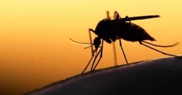 Immagine per l'articolo: Virus Zika: il punto sulla situazione
