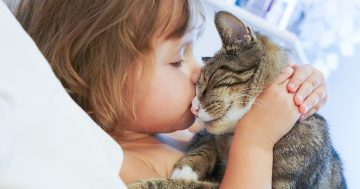 Bambina che stringe a sé il suo gatto, animale domestico