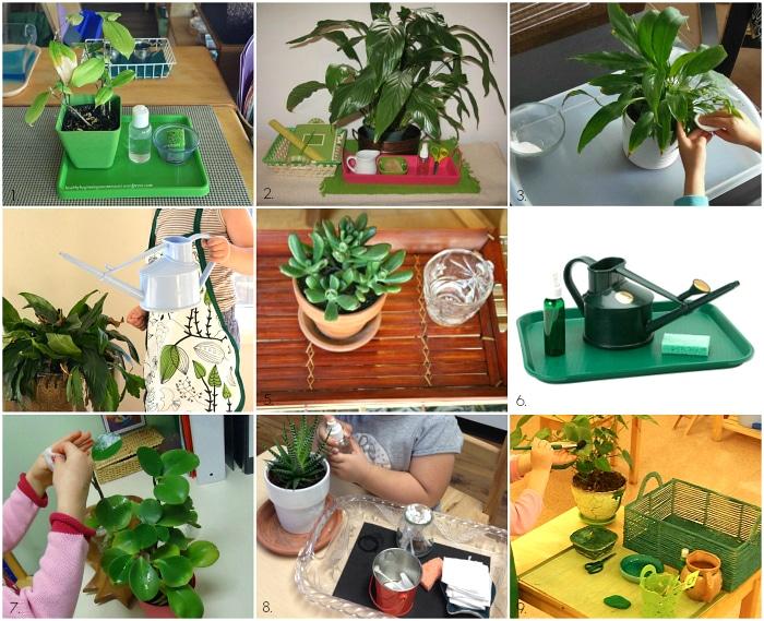 Tappe per imparare a curare le piante