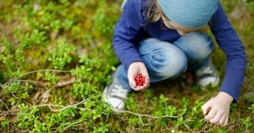 Bambina raccoglie frutti rossi nel bosco