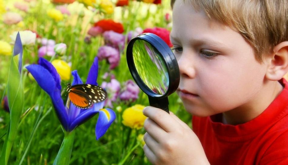 Bambino osserva un fiore