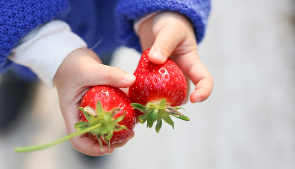 Mani di bambino che tengono due fragole