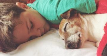 Bambino che dorme sdraiato accanto al suo cane