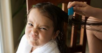 Immagine per l'articolo: Come eliminare i pidocchi? Trattamenti e rimedi efficaci